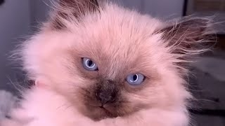 FUNNIEST And CUTEST CAT VIDEOS 😸 2020- Beautiful Cats | YUFUS