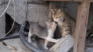 Cute Scaredy Kittens hid behind the wall when they saw me.