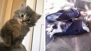 Cute Kittens Doing Funny Things, Cutest kittens in the worlds 2021 🐱Cutest Cats #15🐱