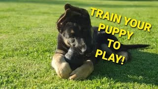 How to PLAY with your German Shepherd Puppy – Shield K9