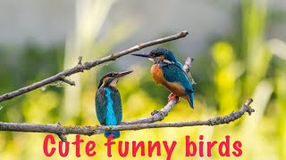 Cute and awesome birds || funny birds || awesome world365 ||