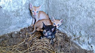Rescue 3 kitten in an abandoned house when their mother is no more | Rescue Animals