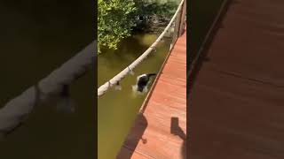 Funny Dogs,Funny Dog Videos,Funny Dog Compilation,Cute Dogs #shorts