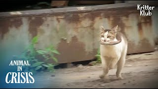 What Three-Legged Mother Cat Does Every Day Not To Lose Kittens Again Is..   Animal in Crisis EP158