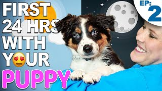 Your First Day And Night With A New Puppy – Bringing Home A New Puppy Episode 2