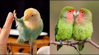 Funny Parrots Videos Compilation cute moment of the animals – Cutest Parrots #6 – Compilation 2020