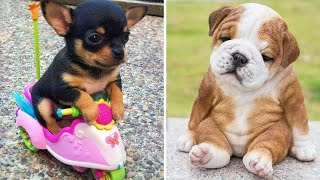 Baby Dogs 🔴 Cute and Funny Dog Videos Compilation #2   Funny Puppy Videos 2020