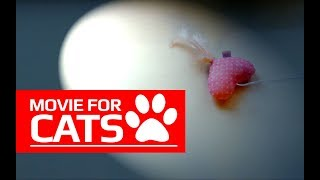 MOVIE FOR CATS – 😺 SURPRISE FOR KITTEN (Entertainment Video for Cats to Watch)