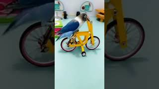 Smart Parrot 🔴 Funny Parrots and Cute Birds Compilation (2021) #9