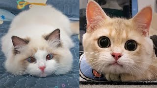 Cute Cats Meowing🐱Best Funny Cats Videos Compilation 2021#7🤣