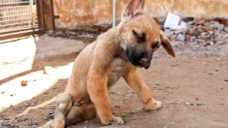 Rescued Street Puppy With Neurological disorder. | Severe Nerve Damage