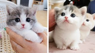Cute Kittens Doing Funny Things 2020 🐱 #19  Cutest Cats