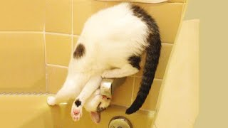 Funniest Cats 😹 – Don't try to hold back Laughter 😂 – Funny Cats Life