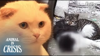 A New Cat Appeared To A Kitten Who Had Protected Her Dead Dad (Part 2) | Animal in Crisis EP116