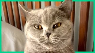 Silly and Cute Cats! Funny Cat Videos