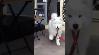 Cute and Funny dogs and puppy's  #shorts #short #dog #funny #cute #cutedogsonly #youtubeshorts .