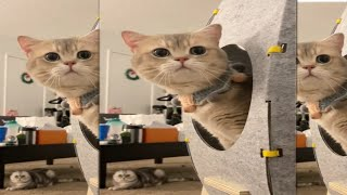 – OMG So Cute Cats ♥ Best Funny Cat Videos 2021
