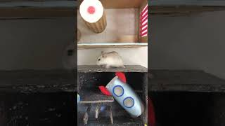 🐹 Most Hamster Funny / The largest minecraft hamster house/ you haven't seen this yet