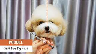 Teddy Bear Style with Small Ears Poodle GROOMING Technique    ASIAN CUTE DOGS