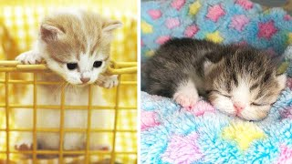 Cute Kittens Doing Funny Things 2021 🐱 #3 Cutest Cats