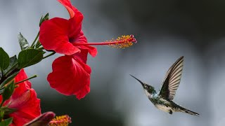 Most beautiful cute birds and nature video beautiful colorful nature and wildlife birds video 2021