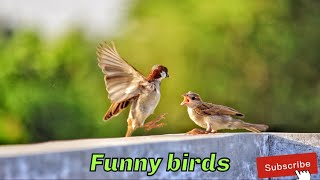 Funny birds video || awesome birds || Awesome World365