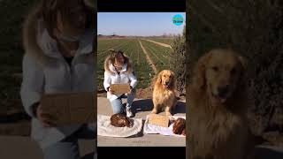 Smart dogs / Funny dogs #shorts
