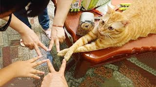 Funniest Cat Videos That Will Make You Laugh #12  | Funny Cats