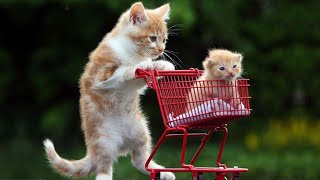 OMG So Cute Cats ♥ Best Funny Cat Videos 2021 #72