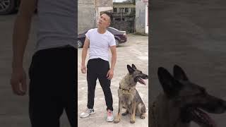 dogs – pet insurance – dog – Funny dogs – Funny Animals#shorts #dog#dogs #short#sorts#laugh#funny