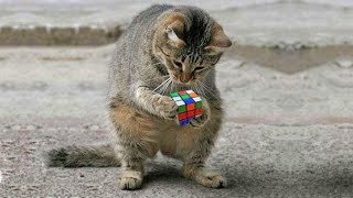 OMG So Cute Cats ♥ Best Funny Cat Videos 2021