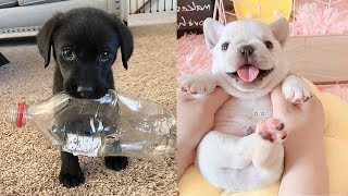 Omg! Cute Puppies Doing Funny Things #5 | Cute VN