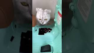 – OMG So Cute Cats ♥ Best Funny Cat Videos 2021 #86