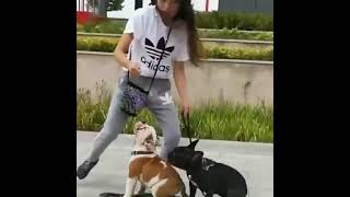 two dogs skating   Funny dogs   Laughter therapy #shorts #funnypets #cutedogs #lovedogs #subscribe