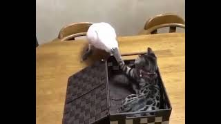 funny parrot video 🤣🤣🤣 #funnypets #funnybirds #birds