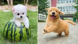 Baby Dogs 🔴 Cute and Funny Dog Videos Compilation #1 | Funny Puppy Videos 2021