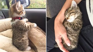 Cute Kittens Doing Funny Things 2021 🐱 #4 Cutest Cats