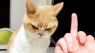 OMG So Cute Cats ♥ Best Funny Cat Videos 2021 #113