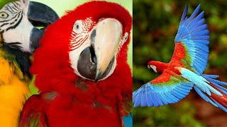 Try Not To Laugh  Funny Birds Video Compilation  cute moment of the animals Smart & Funny Bird Video