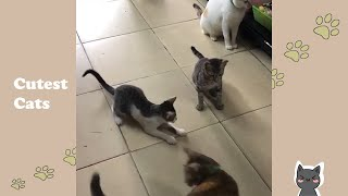 Cute Cats Exciting To See The Laser #Shorts