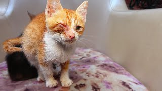 Poor Little Kitten Meows and Wants Care 🐈 ( hungry kitten wants food ) lucky paws – part 3