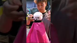 Pomeranian Dog 🐶 Cute and funny dogs videos compilation   Funny Animals Videos_12 #Shorts