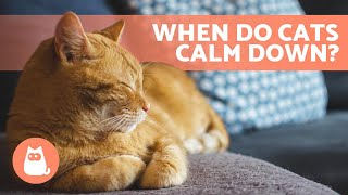 What AGE Do KITTENS CALM DOWN? � (Kitten to Adult Cat Development)