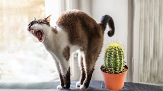 Funniest Cat Videos That Will Make You Laugh #33    Funny Cats