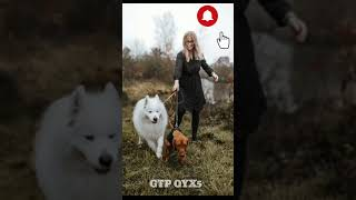 Cute and funny dogs compilation #shorts