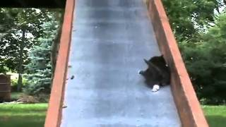 Dramatic Kittens on a Slide