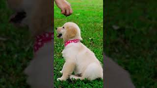 🐶😍Cute Dogs Compilation 😍🐶 #Shorts